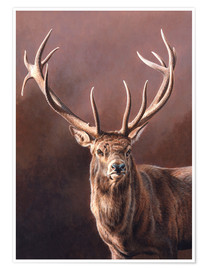 Póster  Portrait of stag