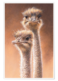 Póster Portrait of ostriches (Struthio camelus)