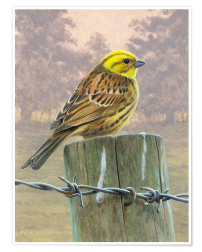 Póster Pastel colored image of yellow bird perching on wooden pole, trees in background, wired fence in for