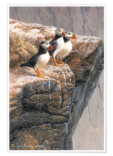 Póster Tree puffins at the edge of rock