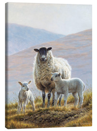 Lienzo  Three sheep in hills