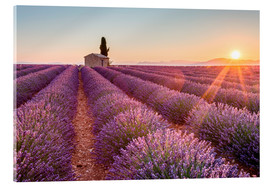 Cuadro de metacrilato  Valensole Plateau, Provence, France. Sunrise in a lavender field in bloom with lonely rural house an - age fotostock
