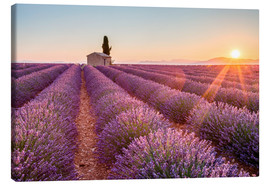 Lienzo  Valensole Plateau, Provence, France. Sunrise in a lavender field in bloom with lonely rural house an - age fotostock