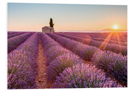 Forex  Valensole Plateau, Provence, France. Sunrise in a lavender field in bloom with lonely rural house an - age fotostock
