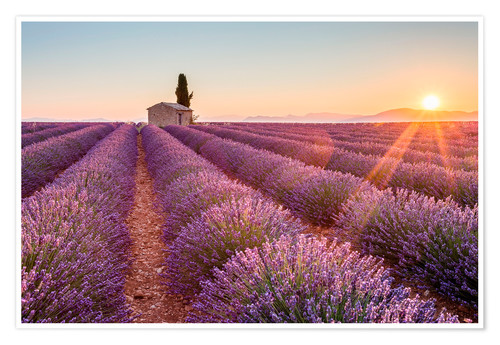 Póster Valensole Plateau, Provence, France. Sunrise in a lavender field in bloom with lonely rural house an