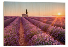 Cuadro de madera  Valensole Plateau, Provence, France. Sunrise in a lavender field in bloom with lonely rural house an - age fotostock