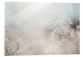 Cultura/Seb Oliver - Close up of backlit frost ice crystals on wavy hair-grass (deschampsia flexuosa)