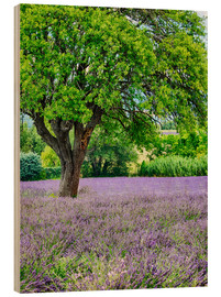 Cuadro de madera  Europe,France,Provence,Lone Tree in Lavender Field - Terry Eggers