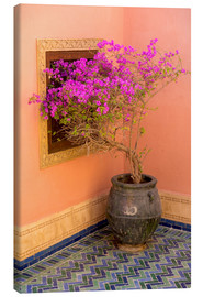 Lienzo  North Africa, Morocco, Marrakech. Bougainvillea glabra in purple container next to ocra colored wall - Emily M. Wilson