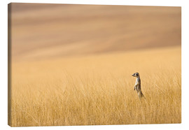 Lienzo  Hoarusib Valley, Namibia. Africa. A Meerkat stands tall in the prarie grass. - Janet Muir