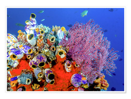 Póster Indonesia, West Papua, Raja Ampat. Coral reef and fish.
