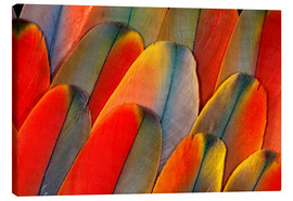 Lienzo  Wing coloring of an macaw - Darrell Gulin