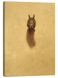 Lienzo  Leaping Red Squirrel - - Tim Hayward