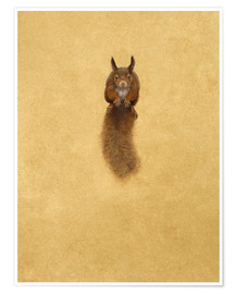Póster Leaping Red Squirrel -