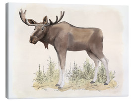 Lienzo  Wilderness Collection Moose - Beth Grove