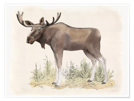 Póster  Wilderness Collection Moose - Beth Grove