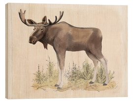 Madera  Wilderness Collection Moose - Beth Grove
