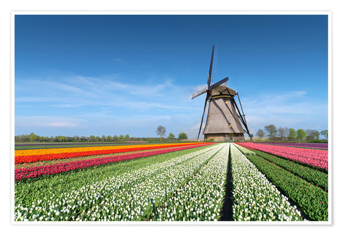 Póster Flowers and windmill