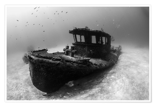 Póster A tugboat wreck in the Bahamas.