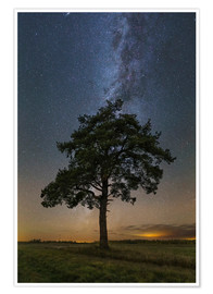 Póster Lonely tree in a field at night under the Milky Way in Vyazma, Russia.