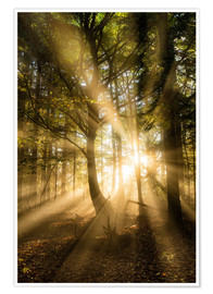 Póster Sunbeams bursting through misty autumnal woodland, Limpsfield Chart, Oxted, Surrey, England, United