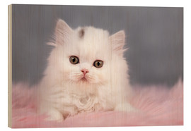 Cuadro de madera  British longhair cat baby in white - Janina Bürger