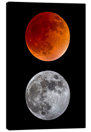 Lienzo  blood moon-super moon-full moon - MonarchC