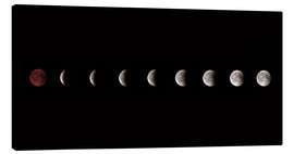 Lienzo  Moon phases 2018 - WildlifePhotography