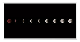 Póster  Moon phases 2018 - WildlifePhotography