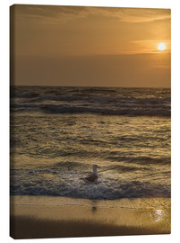 Lienzo  Seagull in the sunset - Heiko Mundel