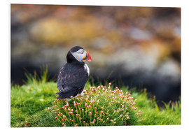 Cuadro de PVC  Puffins on Lunga Island - Reemt Peters-Hein