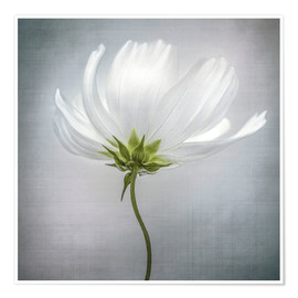 Póster  Cosmos - Mandy Disher