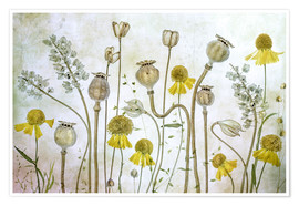 Póster  Poppy and Helenium - Mandy Disher