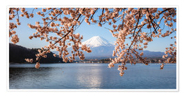 Póster  Mt. Fuji with cherry tree panoramic, Japan - Matteo Colombo