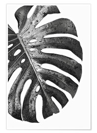 Póster Monstera negro 01